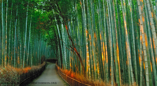 Bamboo-fairytale-destinations