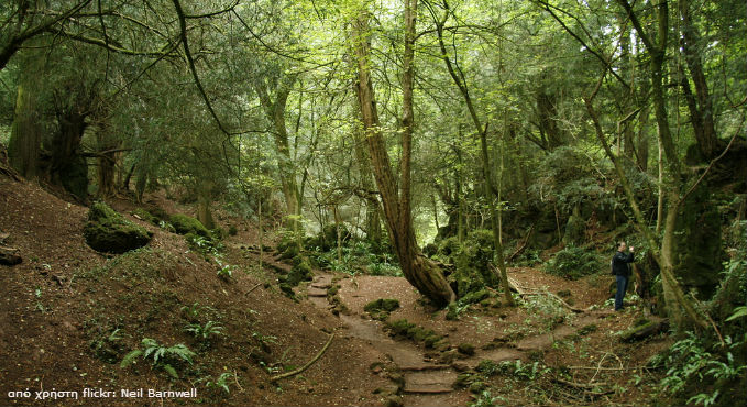 Puzzlewood - Forest of Dean, Gloucestershire, Ηνωμένο Βασίλειο
